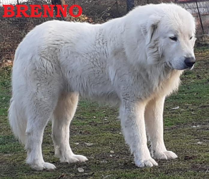 Cuccioli da BRENNO X MAGNETICA nati 30-01-2021